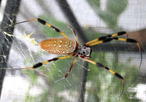 spider1-web.jpg