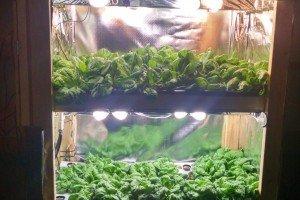 farm hydroponics