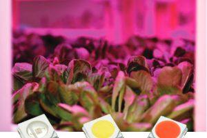 Luxeon-leds-grow-lettuce