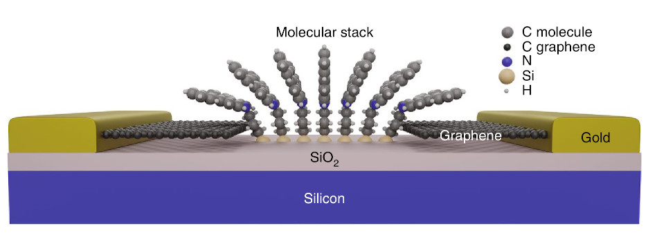 Molecules connected to graphene for future sensors